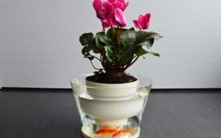 9 способов организовать автополив для комнатных растений