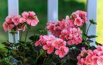 8 цветов убираем из спальни, а иначе замучает бессонница