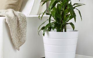 5 способов разместить цветочные горшки, которые не помещаются на подоконнике