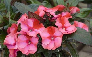6 домашних растений, которые не боятся ни сквозняков, ни темноты