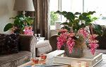 Мединилла – тропическая красавица из XIX века