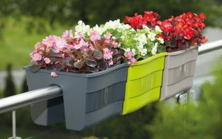 Как разместить цветы, если на подоконниках нет места