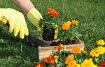 8 цветов, которые стоит посадить на осень в своем саду