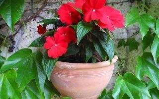 Мокрый Ванька и еще 8 растений со смешными народными названиями: за что их так прозвали