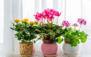 Как выбрать горшок для цветка, чтобы растение в нем прижилось