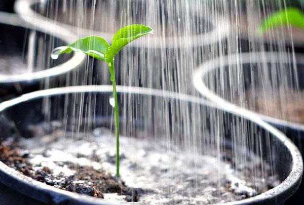 дождевой полив