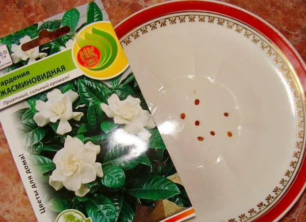 размножение гардении семенами
