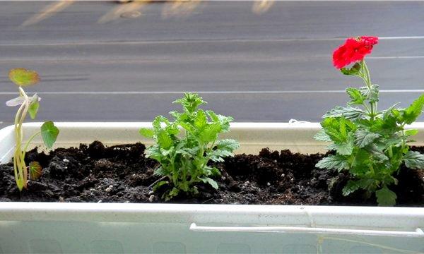 какая почва нужна