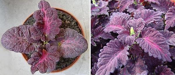 красивые растения фото