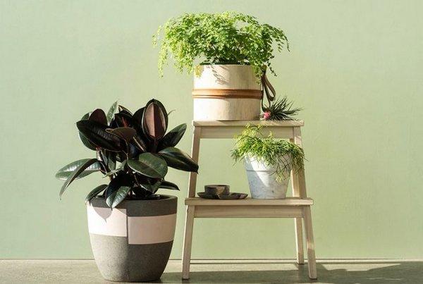 красивые растения в доме