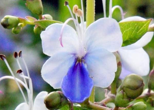 цветок фото