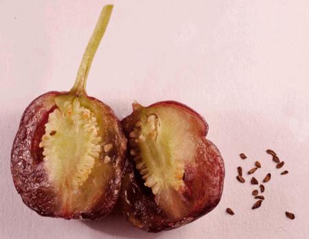 плоды фуксии с семенами