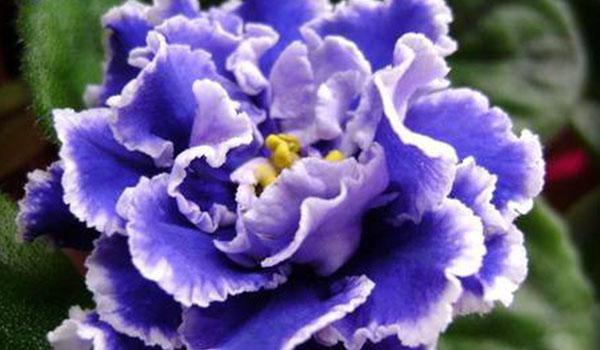 Цветок гофрированный