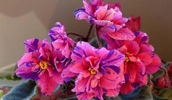 cvetok-korallovyj