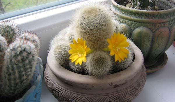 Цветок на окне