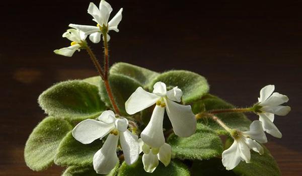 Оса-редчайшая форма цветка