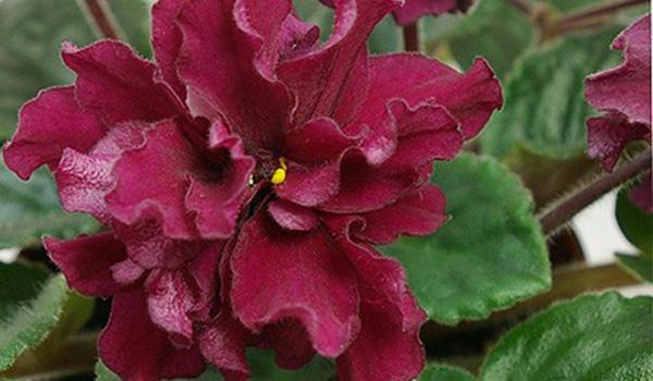 Простая форма цветка