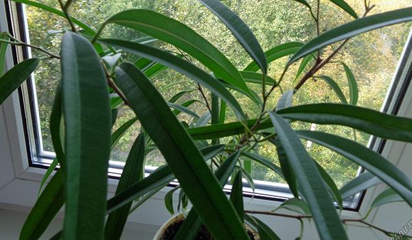 Растение на окне