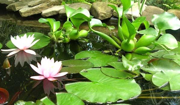 Водоем с растениями