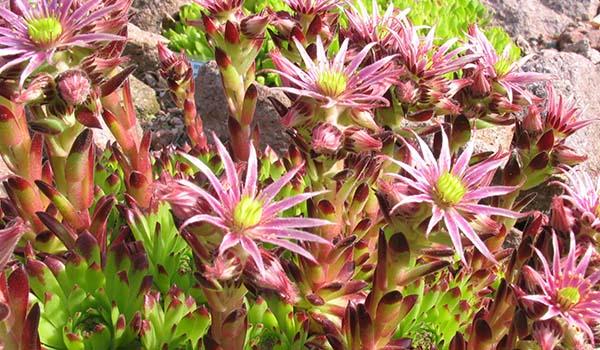 цветок расцвел