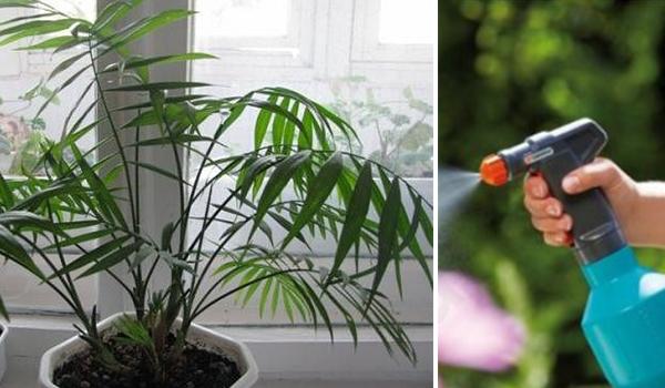 Опрыскиватель и растение