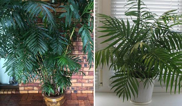 Пальма украшает интерьер