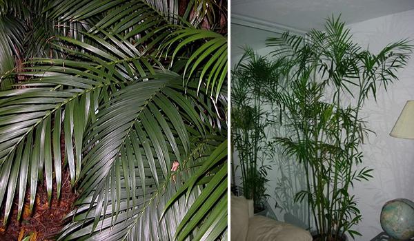 Растение в комнате