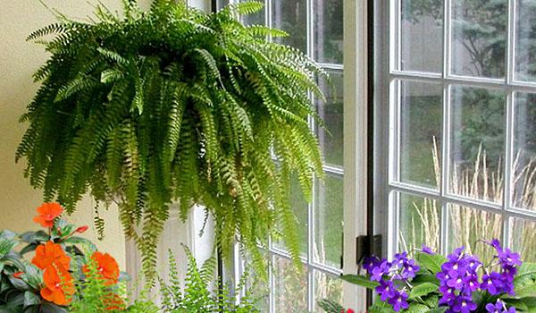 Размещение растения