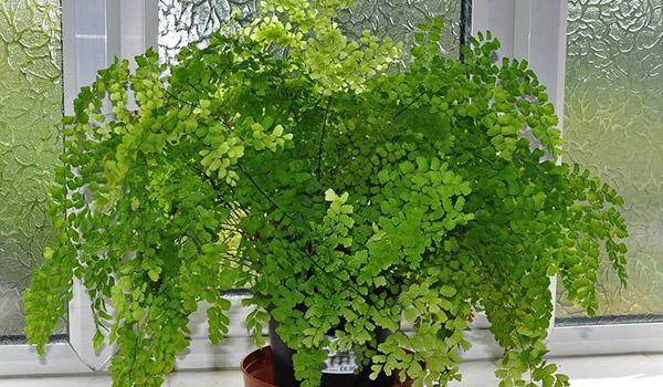 Травянистое растение