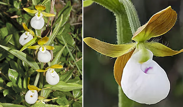 Компактные цветы