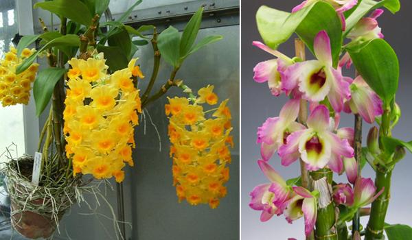 Растение и его цветки