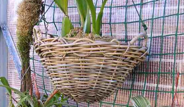 Растение в корзине