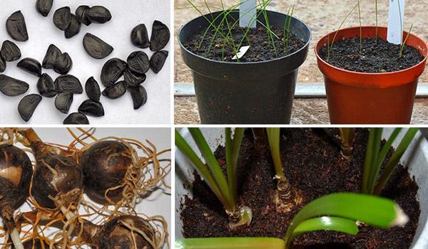 Семена и луковицы