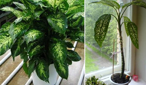 Стебель и листья растения
