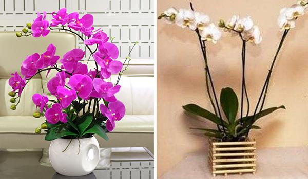 Виды емкостей для цветов