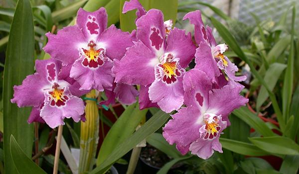 Гибрид цветка