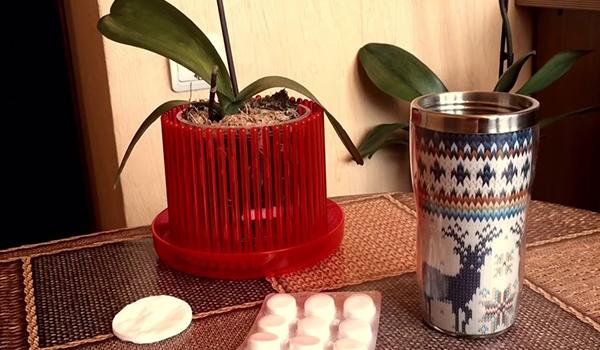 Применение таблеток для орхидеи