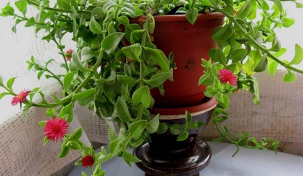 Растение у окна