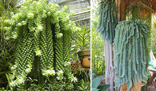 Растение в горшках