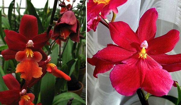 Разновидность цветка