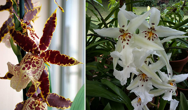 Разные расцветки орхидей