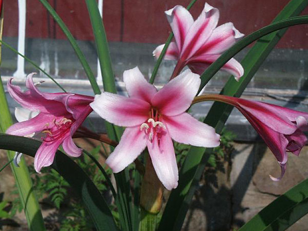 Цветок на улице