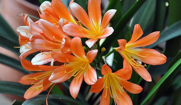 Киноварная оранжевая