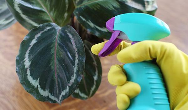 Опрыскивание растения