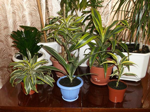 Растение виды и сорта