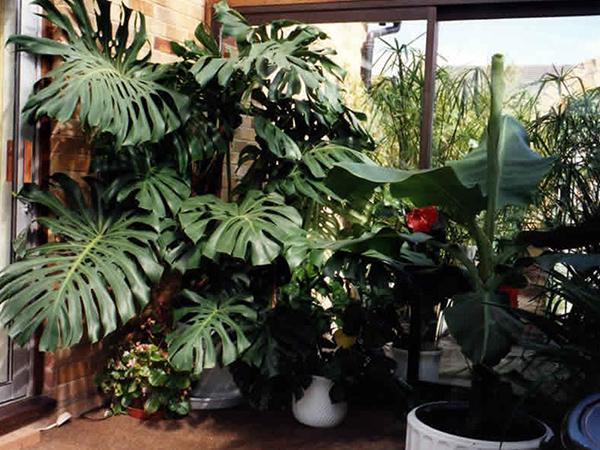 Просторное место для растения