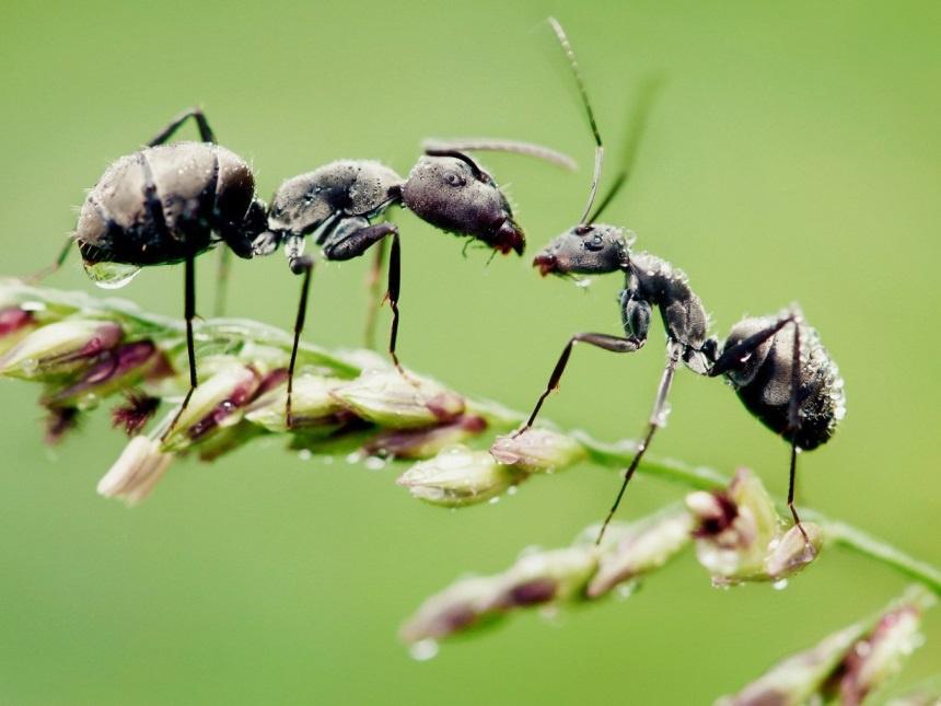 Чем бороться с муравьями на огороде