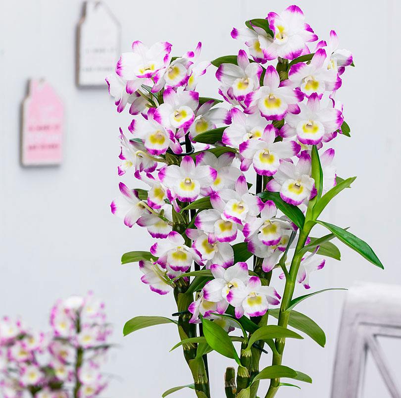 Разновидности орхидей: фото и названия