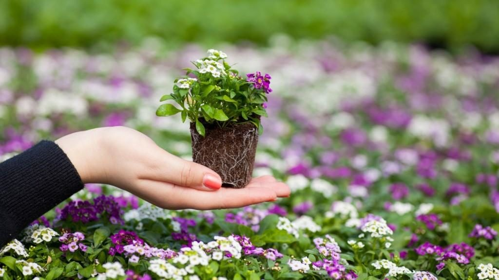 Рассаду каких цветов выгоднее всего садить на продажу