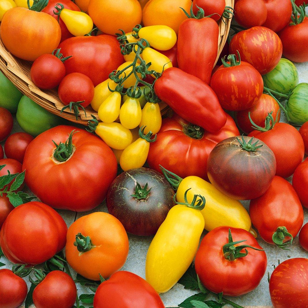 Лучшие сорта томатов